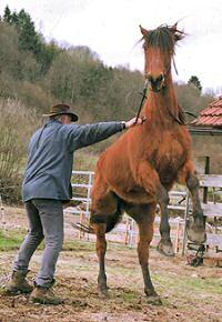Apprivoiser son cheval r duquer les chevaux difficiles - Cheval rebelle ...