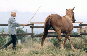 Pour votre cheval, ce doit être un jeu, pas une fuite